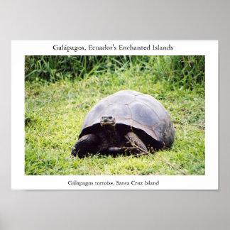 彼がありたいと思うように大きいGalápagosのカメ ポスター
