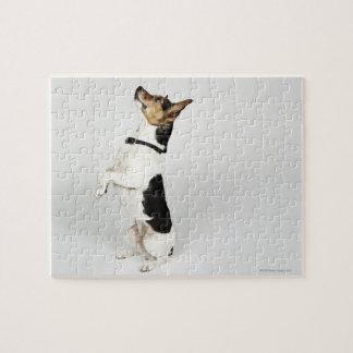 彼のに坐っているジャックラッセル犬のポートレート ジグソーパズル
