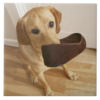彼ののスリッパを持つラブラドル・レトリーバー犬の子犬 タイル