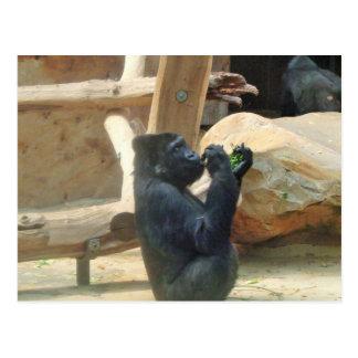 彼の昼食、動物、野性生物、サルを食べているゴリラ ポストカード