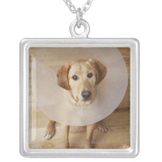 彼の首に円錐形を持つラブラドル・レトリーバー犬 シルバープレートネックレス