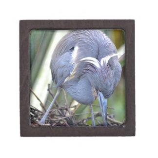 彼女の巣を増強している鷲 ギフトボックス