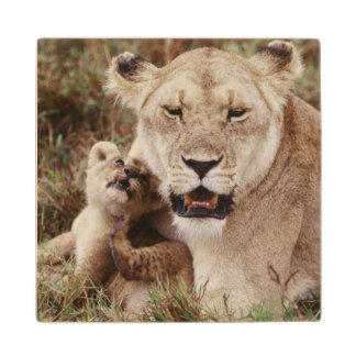 彼女の幼いこどもと坐っている母ライオン ウッドコースター