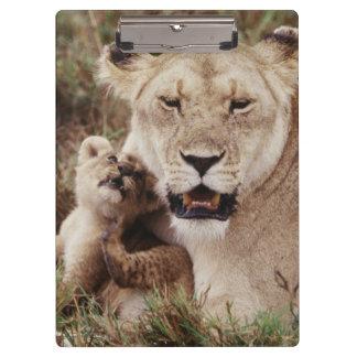 彼女の幼いこどもと坐っている母ライオン クリップボード