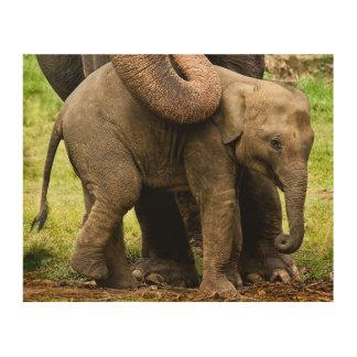 彼女の赤ん坊を保護しているメスのアジアゾウの母 ウッドウォールアート