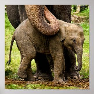 彼女の赤ん坊を保護しているメスのアジアゾウの母 ポスター