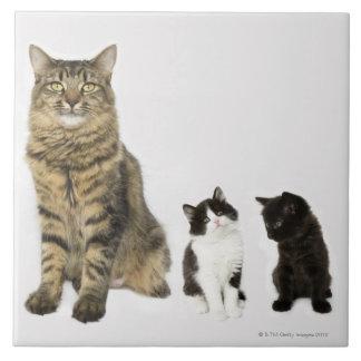 彼女の4匹の子ネコを持つ母すべてのモデル 正方形タイル大