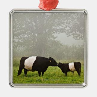 彼女を生み出しているギャロウェーベルトを付けられた牛の霧深い場面 シルバーカラー正方形オーナメント