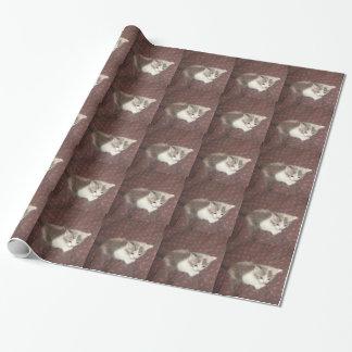 征服の子猫の包装紙1 ラッピングペーパー