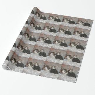 征服の子猫の包装紙5 ラッピングペーパー