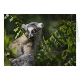後につかれたlemur (Lemurのcatta)、マダガスカルを鳴らして下さい カード