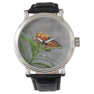 後ろ蝶薮の(昆虫)オオカバマダラ、モナーク。 腕時計