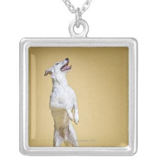 後ろ足に立っている犬 シルバープレートネックレス