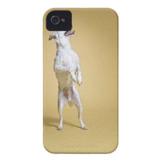 後ろ足に立っている犬 Case-Mate iPhone 4 ケース