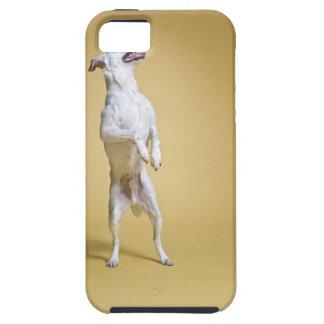 後ろ足に立っている犬 iPhone SE/5/5s ケース