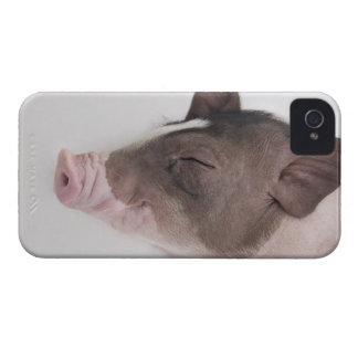微笑するコブタの頭部のクローズアップ Case-Mate iPhone 4 ケース