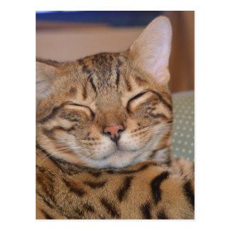微笑のベンガル ポストカード
