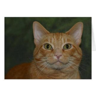 微笑の子猫 カード