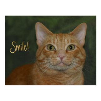 微笑の子猫 ポストカード
