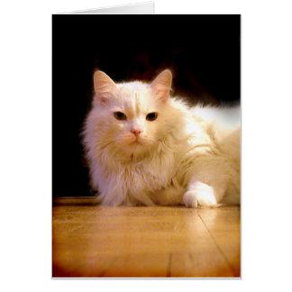 微笑の白い猫の挨拶状 カード