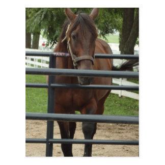 微笑の馬 ポストカード