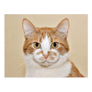 微笑猫 ポストカード