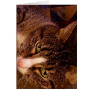 心地よい猫 カード