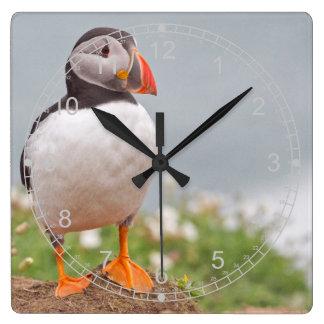 忍耐強いツノメドリ スクエア壁時計
