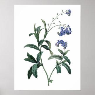 忘れ私ないの植物の優れた質のプリント ポスター