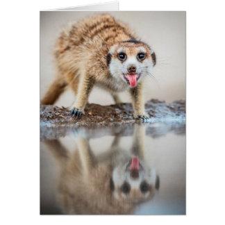 応援! Meerkat -季節のごあいさつ カード