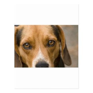 忠節なビーグル犬の猟犬の猟犬 ポストカード