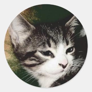 思慮深い子ネコ ラウンドシール