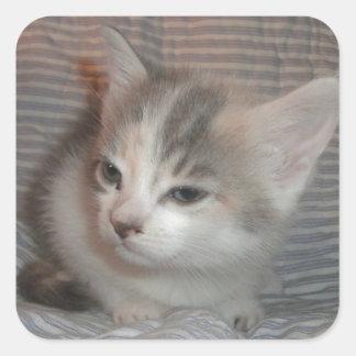 悩まされた子猫 スクエアシール
