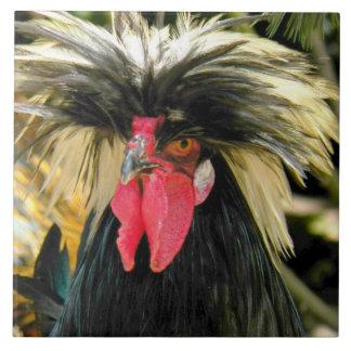 悪い毛の鶏の写真 タイル