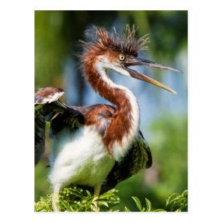 悪い毛を搭載するTricoloredの鷲の鳥 ポストカード