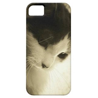 悲しいメインのあらいぐまの子猫 iPhone SE/5/5s ケース