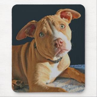 悲しい子犬のピット・ブル犬の小犬のマウスパッド マウスパッド