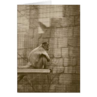 悲しい猿 カード