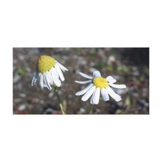 「悲しく幸せな」-デイジー(花) キャンバスプリント