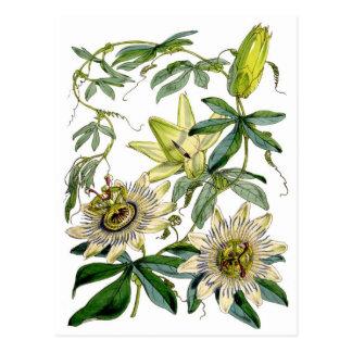 情熱によっては植物のイラストレーションが開花します ポストカード