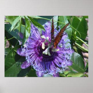 情熱の花および蝶 ポスター
