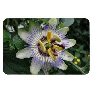 情熱の花の報酬の磁石 マグネット