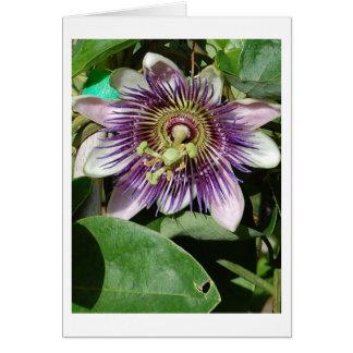 情熱の花 カード