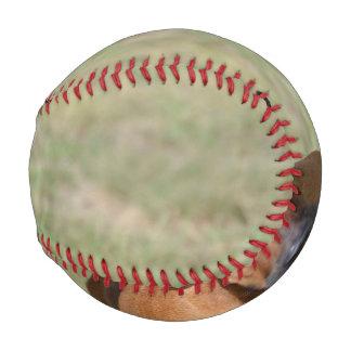 意気揚々と歩くRhodesian Ridgeback 野球ボール