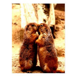 愛およびキスをするなプレーリードッグ ポストカード