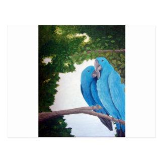 愛のコンゴウインコ ポストカード