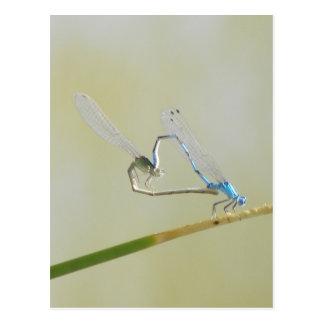 愛のトンボ ポストカード