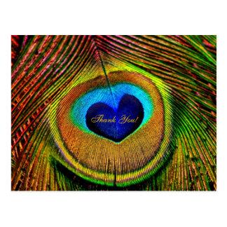愛の孔雀の羽の目ありがとう 葉書き