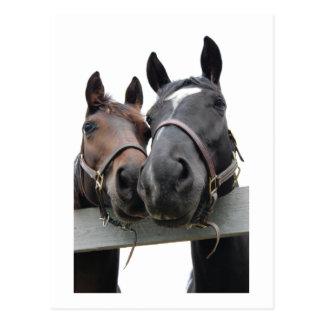 愛の馬 ポストカード
