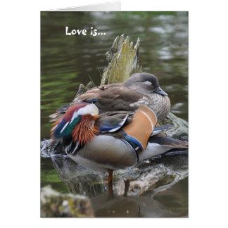 愛は…睡眠のマンダリンです カード